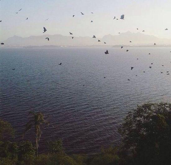 Birds 💕 First Eyeem Photo