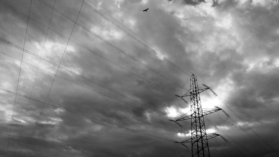 Feel the energy Power Lines Energy Bird Clouds And Sky Blackandwhite Cableicious Morning Sky Sky Clouds Electricity  Rhine Valley Switzerland Oberriet Magicoflight Adapted To The City