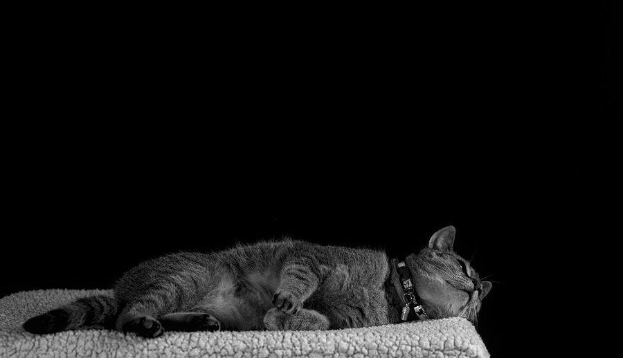 Cat sleeping on black background