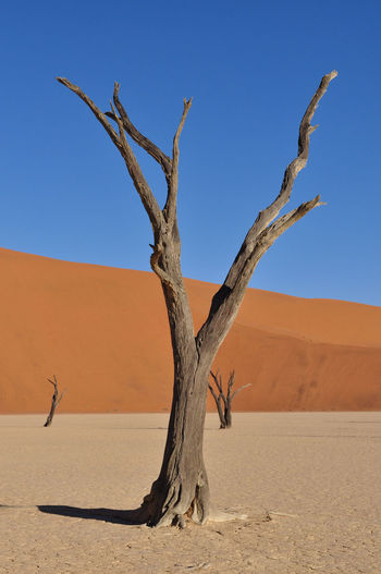 Dead trees at namib desert