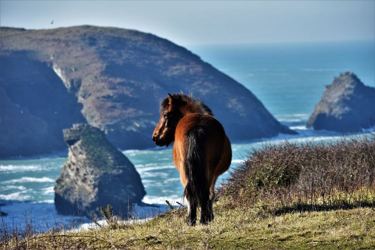 View of a horse on top of cliffs, looking ocean