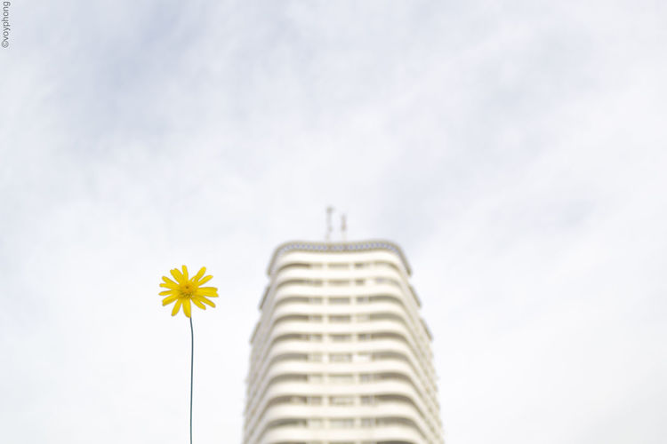 Architecture Flower Nature No People Outdoors Shootermag Shootermagazine Yellow Yellow Flower