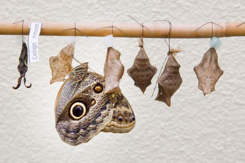 Giant owl and cocoon hanging on bamboo against wall