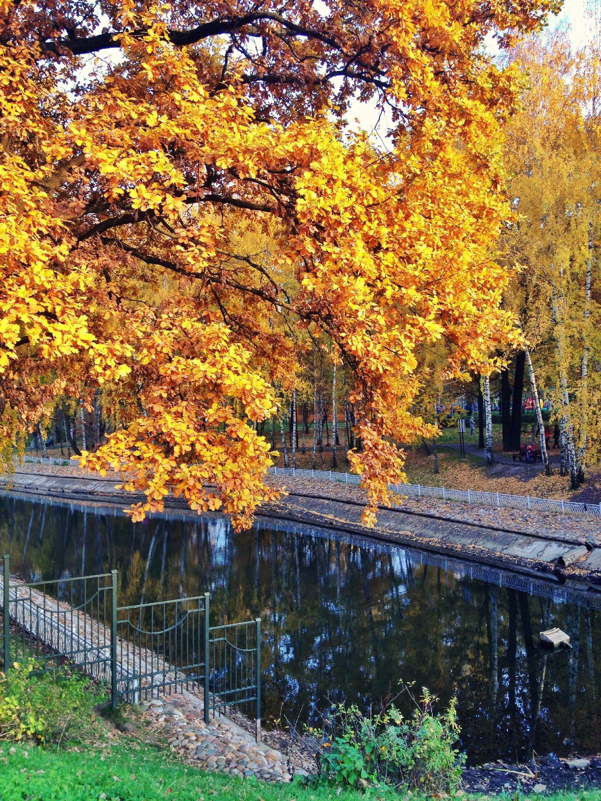 tree, autumn, change, season, yellow, branch, beauty in nature, orange color, nature, park - man made space, tranquility, growth, railing, tranquil scene, scenics, fence, leaf, tree trunk, outdoors, day