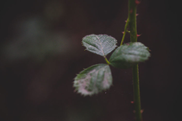 Plant Growth Close-up Leaf Plant Part Nature Beauty In Nature No People Fragility Vulnerability  Selective Focus Freshness Green Color Day Outdoors Plant Stem Focus On Foreground Beginnings Tranquility Twig