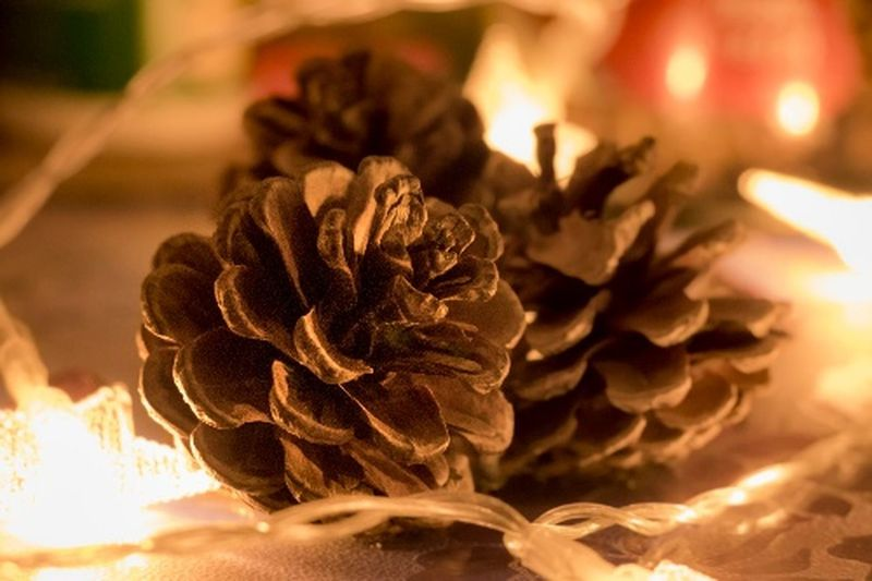 Merry Christmas Merry Christmas Flower Head Flower Petal Close-up Plant