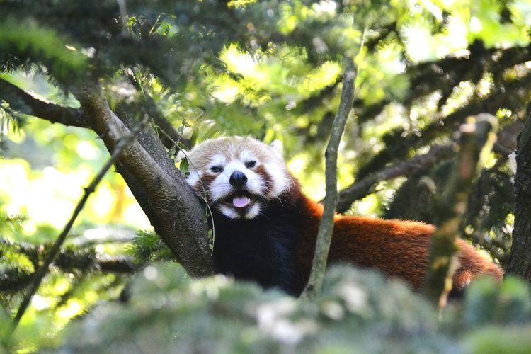 Close-up portrait of paint panda on tree