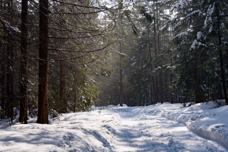 Scenic View Of Trees In Snow Covered Forest