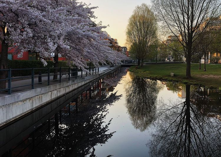 Canal amidst trees against sky in city
