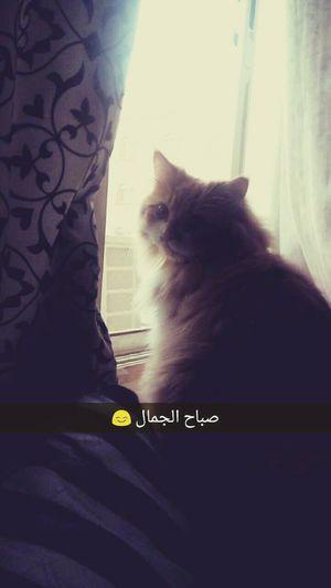 Goodmorning Cat Lovers Sunrise صباحكم_جميل صباحو عسل