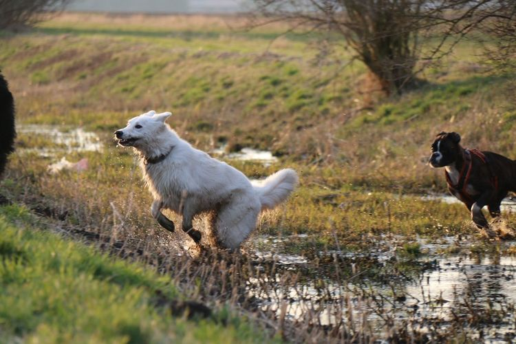 Juno's Gang 😉 EyeEm Nature Lover Juno's World Dog I Love My Dog Nature