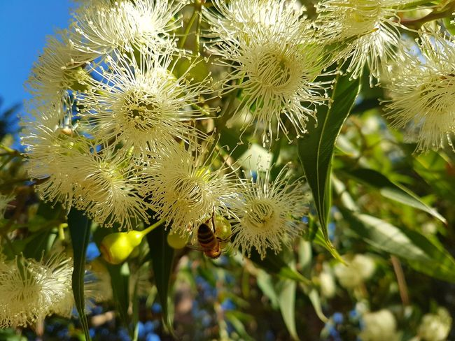 Nature Growth Close-up Plant No People Outdoors Day Beauty In Nature Bee Collecting Pollen Nature Fruit