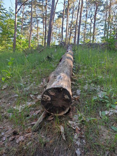 Wald Tree Tree