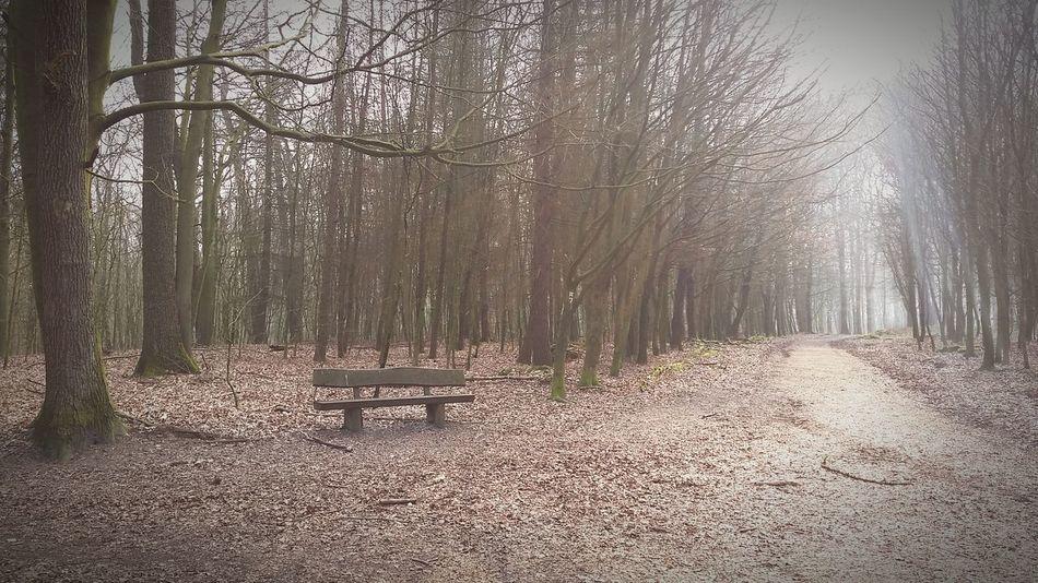 Bench Inthewoods Walking Around Naturelover Trees Ways Lonelyatmosphere