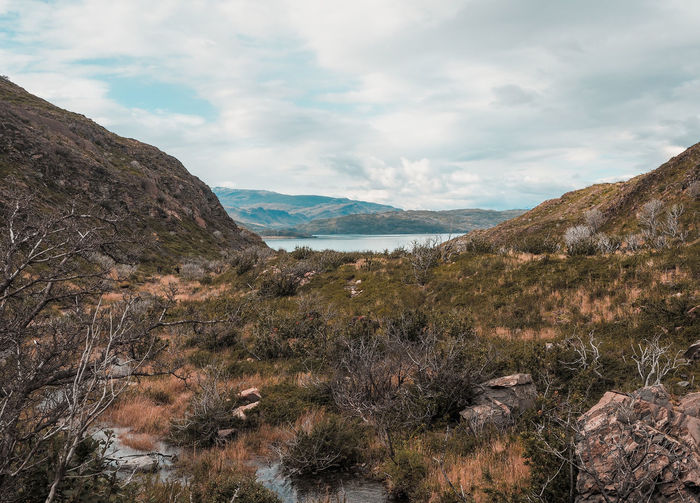 The beautiful scenes of Torres Del Paine Chile Green Green Color Hikes National Park Nature Nature Photography Pure Tranquility Trees Views Distance Forest Hiking Trail Mountains Scenery Stream Torres Del Paine Valley Walkway
