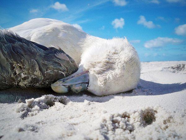 G.O.N.E. Bird Beach Dead Sunny Animals Seagulls Sad Sand Macro Beauty My Favorite Photo The Photojournalist - 2016 EyeEm Awards Nature's Diversities Fine Art Photography Colour Of Life