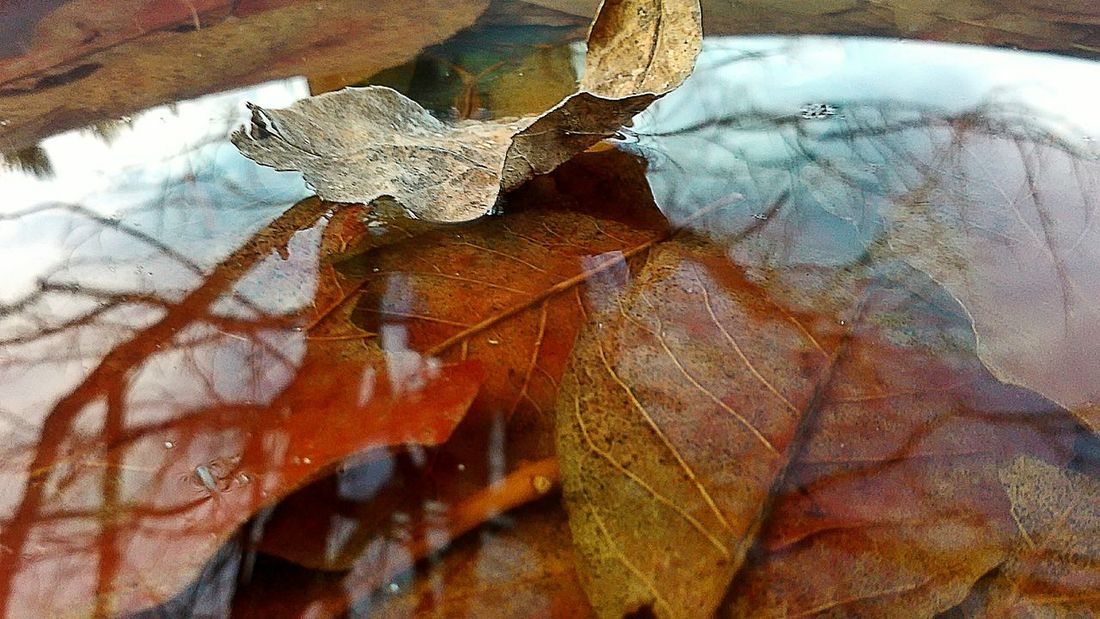 Nature_collection Nature On Your Doorstep Fall Fall Leaves Fall Season Fall_collection Fall Colors Water_collection Water Reflections Water_collection Water Reflection Leaf Autumn Leaves Autumn 2015 EyeEm Best Shots - Autumn / Fall Autumn Collection Autumn Colors