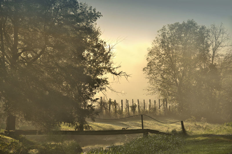 Barrier Beauty In Nature Boundary Day Fence Fog Growth Land Landscape Nature No People Non-urban Scene Outdoors Plant Scenics - Nature Sky Sunlight Tranquil Scene Tranquility Tree