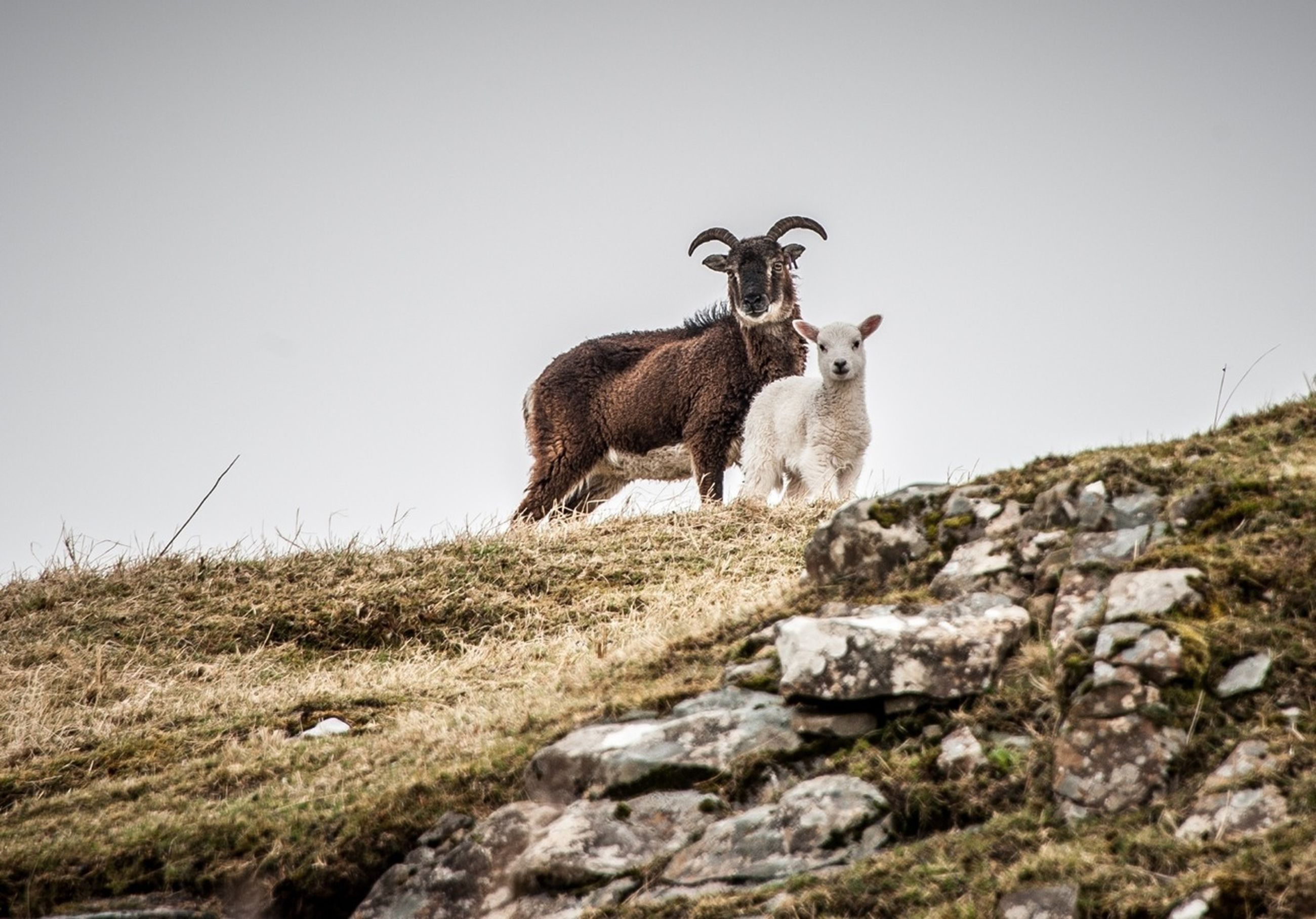 animal themes, mammal, one animal, clear sky, animals in the wild, wildlife, rock - object, copy space, low angle view, sitting, full length, safari animals, nature, day, outdoors, rock formation, no people, rock, standing, sky