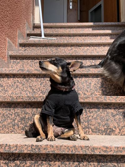 Dog sitting on staircase of building