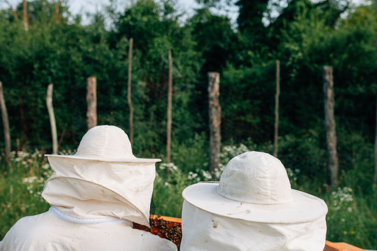 Rear view of beekeepers examining beehive