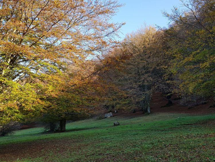 contrasto incredibile di colori dell'autunno Colori Autunno Autumn Colors Colori Landscape Paesaggio Autunn Autumn colors Autunno🍁🍁🍁 Foglieautunnali Monte Cucco Fogliediautunno Paesaggio Paesaggio_stupendo🗻 Paesaggio Montano Paesaggio Umbro Bosco Umbria, Italy Italy🇮🇹 Tree Grass Sky Green Color