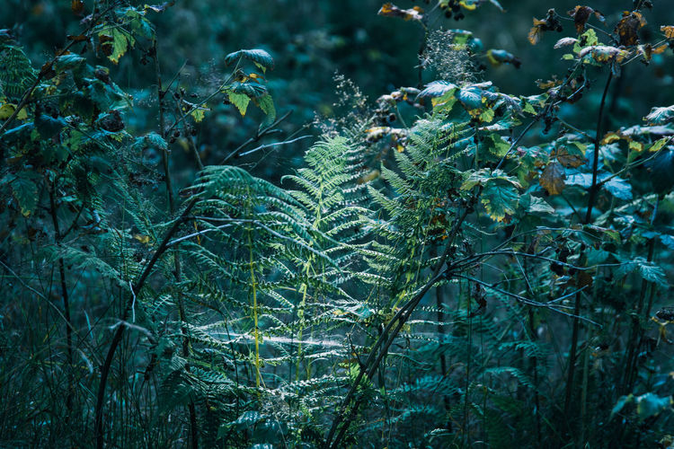 Close-up of fresh green plants in forest - fern