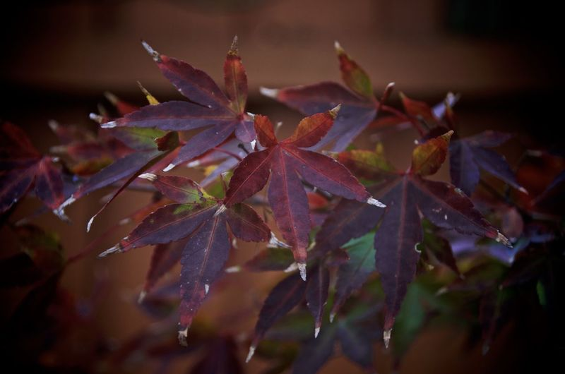 Beauty In Nature Botany Change Close-up Day Dew Focus On Foreground Fragility Freshness Growing Growth Leaf Leaves Natural Pattern Nature No People Outdoors Petal Plant Season  Selective Focus Stem Tranquility Twig Weather