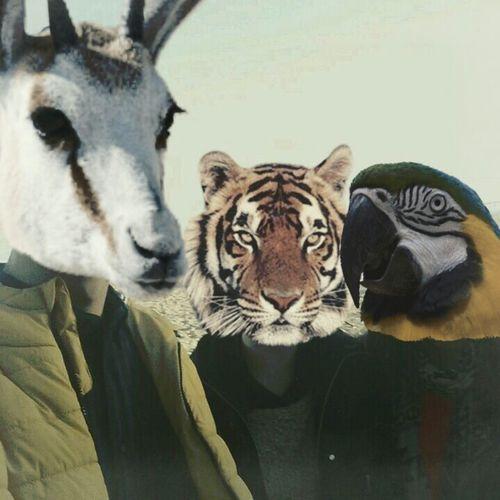 My Head Is An Animal EyeEm Animal Lover Lifestyle People
