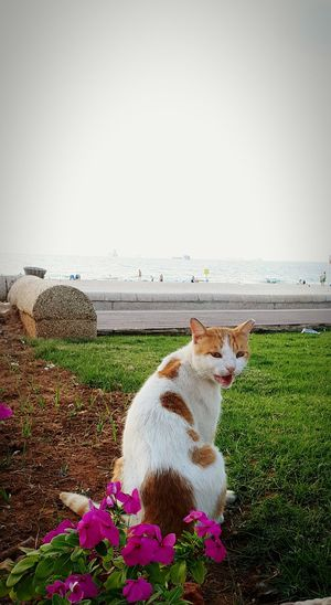 c Cat Cat Lovers Cats Of EyeEm Tiger Cat Beauty In Nature Nature Water Pets Outdoors Domestic Animals One Animal Day Sea Animal Themes Nature Beach Summer Portrait No People Looking At Camera Sky Beauty In Nature Mammal EyeEmNewHere