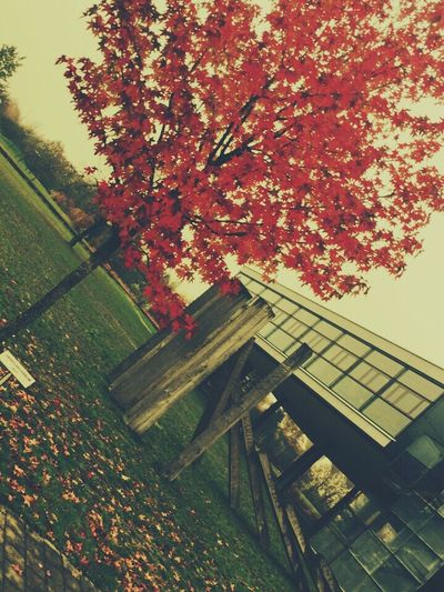 Tree Plant Autumn Nature Built Structure Change Architecture Growth Day Outdoors No People Branch Building Fall Leaf Plant Part Beauty In Nature