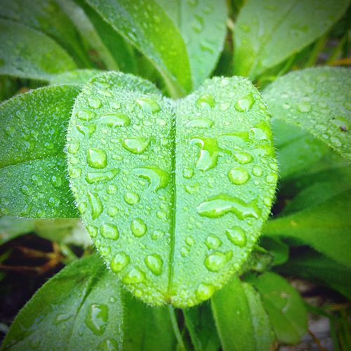 Drop Wet Rain Water Leaf Nature Close-up Dew RainDrop Freshness Growth Purity Plant Weather No People Fragility Green Color Outdoors Day