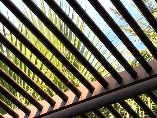 Pattern Palm Tree Palm Leaves Palm Desert, CA Architecture Sunshade Angles Louvers