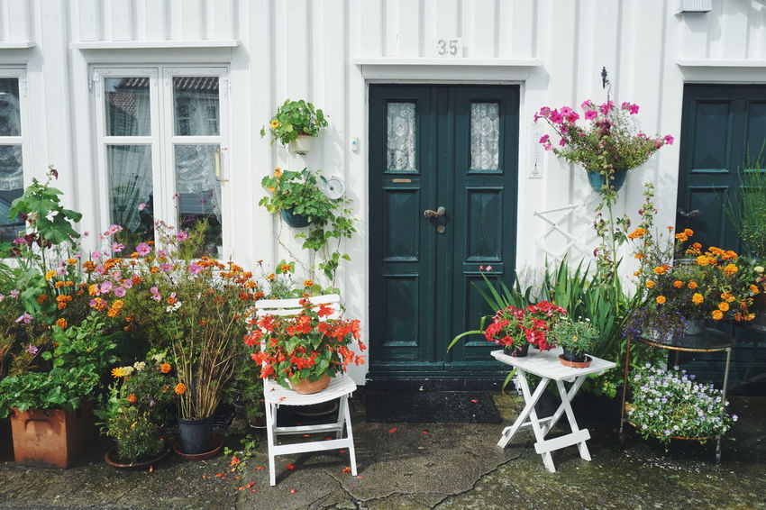 old house with flowers in Mandal, Norway Flower Door Window Building Exterior Outdoors Plant Day Architecture No People Built Structure Multi Colored Nature Norwegian Summer Houses Wooden Houses City Sørlandet Mandal Norway Architecture