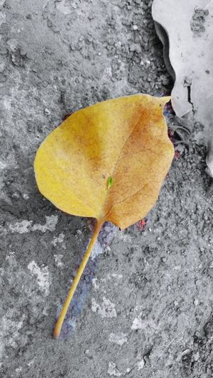 Leaf Autumn Dry Outdoors No People Beauty In Nature Close-up Day Nature Yellow First Eyeem Photo