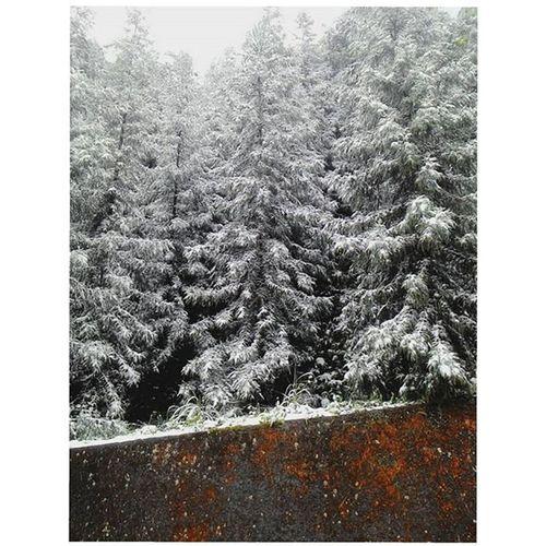 _ First snow 初雪 向天湖 整山 都是 雪白 色 的雪 雪在 樹上 美 只是 回去 看阿嬤 結果 賽車 因為 大家 都 跑去 向天湖 看雪 雪 初雪 Firstsnow Snow White Trees Tree 夢幻 冰雪 冷 Cold