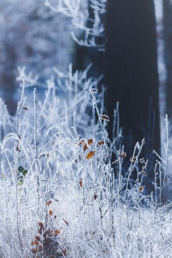 From a couple of weeks ago. Still waiting for winter! 😕💙❄️   Nature Growth Plant Beauty In Nature Outdoors No People Field Close-up Day Grass Flower Cold Temperature Fragility Freshness EyeEm Nature Lover Eye4photography  EyeEm Gallery EyeEm Best Shots EyeEm Frost Nature_collection Nature Tree Trees TreePorn
