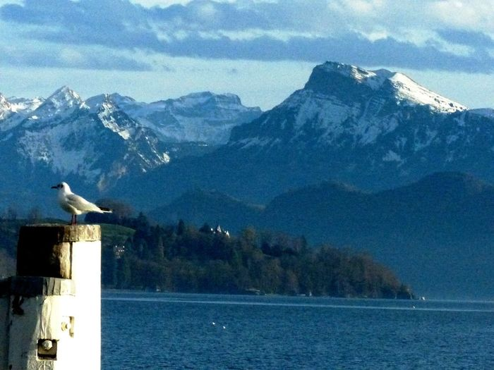 Kanton Luzern Heikobo Januar2014 Luzern Schweiz Alpen
