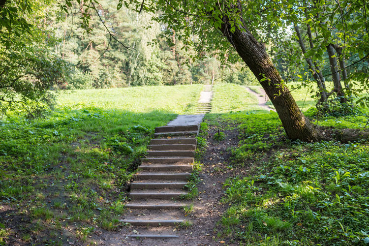 Stairway in the forest, Russia, Polenovo Russia Russia. Polenovo Stairs Stairway Tula Oblast Beauty In Nature Day Forest Grass Green Color Landscape Museum Nature No People Outdoors Polenovo Scenics Strakhovo Tranquil Scene Tranquility Tree