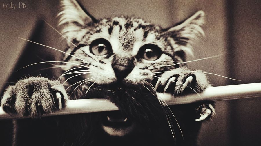 Cat♡ Love ♥ Felino Eyemphotography Photography Time Instantphoto Instantes_fotograficos Shooting Beauty Eyeemphotography Shootanimals
