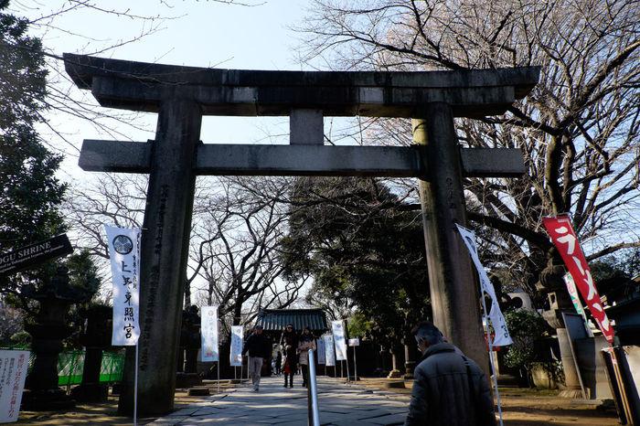 上野東照宮の鳥居 Fujifilm Fujifilm X-E2 Fujifilm_xseries Japan Japan Photography Japanese Culture Shrine Tokyo Tree Ueno Ueno Park XC16 上野 上野公園 上野東照宮 日本 東京 神社 鳥居