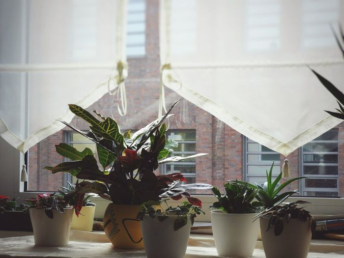 Plant Nature Indoors  Table Tree Flower No People Day Fen Up Close Street Photography Orchid Flower Head Blumen *~* Blatt ster Beauty In Nature Küche