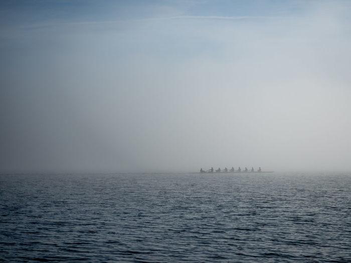 #fog #Lake #reed #rowing