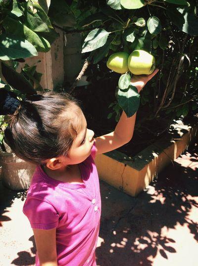 Cosecha Manzanas