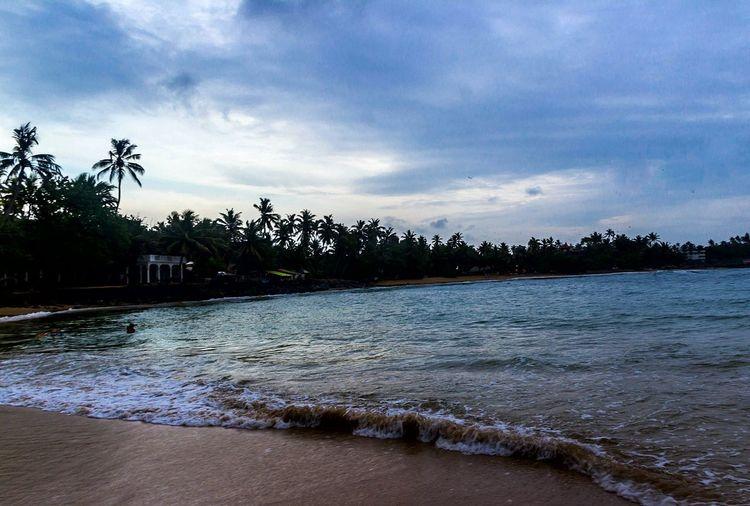 Beach Palm Tree Exposureshots Scenics Mirissabeach