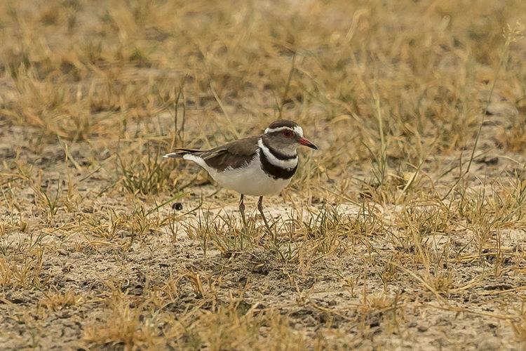 Bird perching on grass
