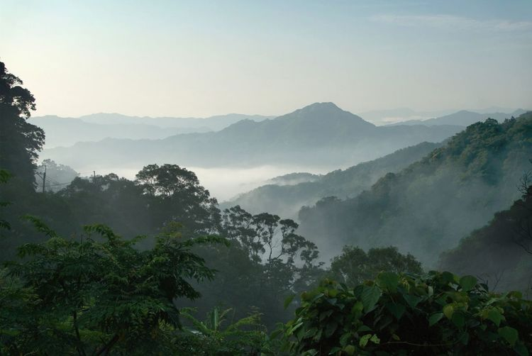 Morning mist in the valleys of New Taipei's Pingxi distict, Taiwan. Taiwan Beauty In Nature Day Fog Forest Hazy  Landscape Mist Morning Mist In Landscape Mountain Mountain Range Nature New Taipei City No People Outdoors Pingxi Plant Scenics Sky Tranquil Scene Tranquility Tree