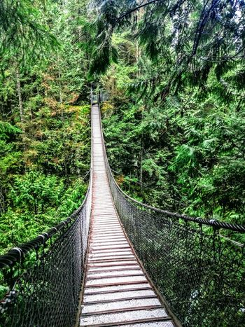 Lynn Canyon Suspension Bridge, Vancouver , Canada🇨🇦 Green Color Tree The Way Forward No People Nature Day Outdoors Connection Growth Beauty In Nature Bridge - Man Made Structure Bamboo Grove Bridge Forest Forest Photography Forest Park Lynn Canyon Suspension Bridge Canada Vancouver
