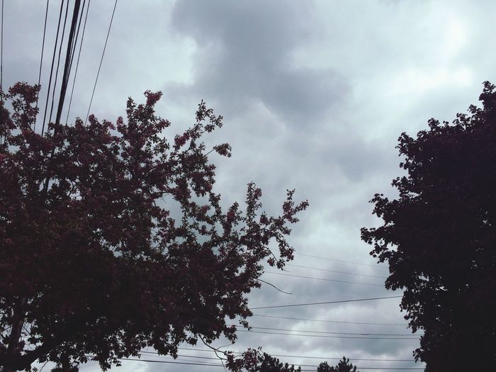 Trees Blue Sky Landscape