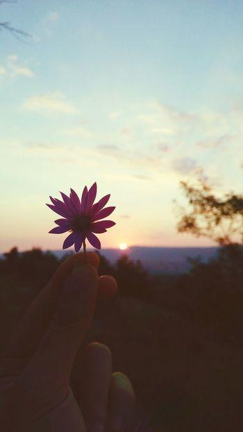'''bir gün daha yaklaştık mı vuslata,,, Summer Road Tripping Bolu  Bolu TURKEY Gerede Flower Gün Batımı Flower Head Flower Sunset Beauty Sunlight Summer Sky Close-up